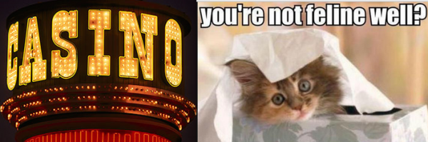 Woman Scams Casino to Pay Off Sick Cat's Vet Bill