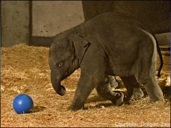 Cristiano Ronaldo Elephant Thong