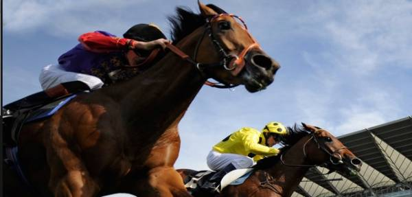 Price Per Head Horse Racing Software – What is Being Offered