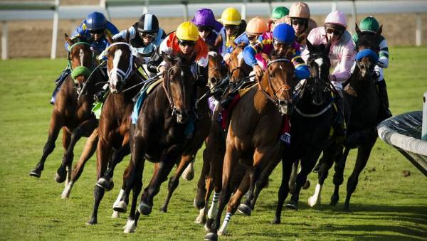 Betting The Belmont Stakes at America's Bookie