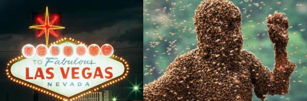 African Killer Bees Invade Vegas