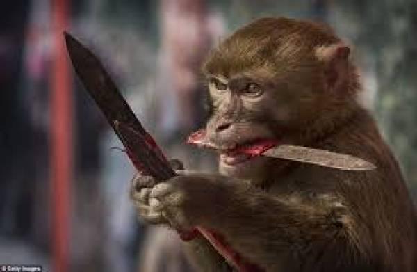 Monkey Knife Fight PGA Games - Tiger Wood Refunds