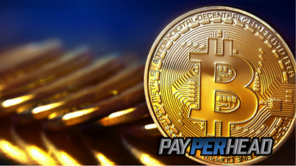 3 Price Per Head Questions Answered About Bitcoin Payment