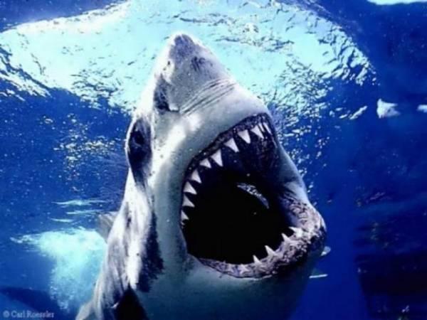 The Atlantic:  Where The Card Sharks Feed