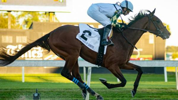 What Will Sole Volante Pay Out to Win the Belmont Stakes