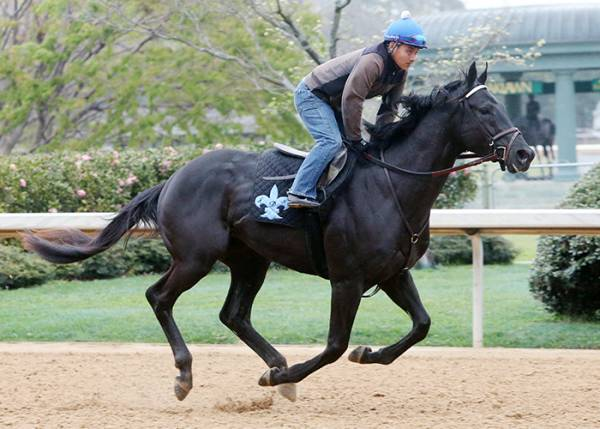 Sonneteer Odds to Win the 2017 Kentucky Derby