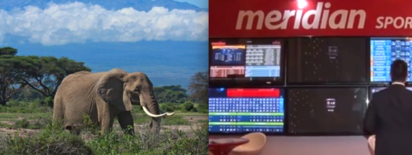 How to Enter the Online Sports Betting Market in Africa, For Operators and Affiliates