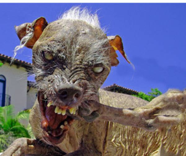 Gary Johnson's Neighbor's Dog