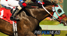 Horse Race Betting: Breeders' Cup Classic 2018 Top Contenders