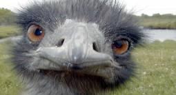 Can't Access Emu Casino From Australia