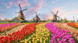 Are Online Casinos Legal in the Netherlands?