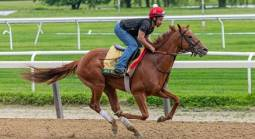 Sir Winston Payout Odds to Win Belmont Stakes