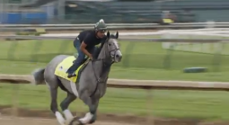Tacitus Not War of Will Favored to Win Belmont Stakes
