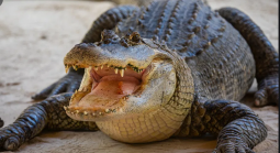 Did Epstein Really Feed Young Girls to Alligators?