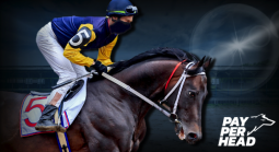 The Kentucky Derby 2019 Contender Odds & Bookie Strategies