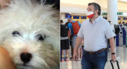 Cruz Abandoned Pet Dog Snowflake During Texas Deep Freeze