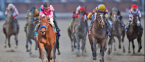 Horse Racing Odds – Breeders' Cup Best Bets 2020