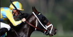 What Will the Payout Be If Classic Empire Wins the Preakness Stakes?