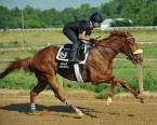 What Will the Payout Be on Finnick The Fierce to Win the Kentucky Derby?