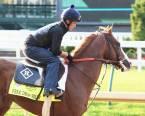 Free Drop Billy Payout Odds 2018 Kentucky Derby