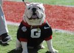 UGA Bulldogs vs Kentucky Wildcats Betting Odds, Prop Bets - Week 8