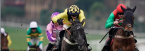 2019 Supreme Novice Hurdle Betting Odds, Picks