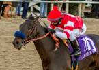 Instilled Regard Payout Odds - 2018 Kentucky Derby