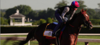 Why Irish War Cry Can Win the Belmont Stakes – Pros and Cons - Latest Odds