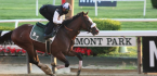 What Will Jungle Runner Pay Out to Win the Belmont Stakes