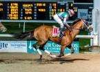 Mandaloun Payout Odds to Win the Kentucky Derby