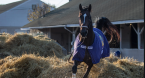 Midnight Bourbon New Favorite to Win Preakness Stakes