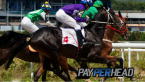 5 Pay Per Head Software Features To Increase Your Profits During Triple Crown