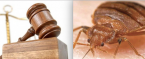 Woman Who Found Bed Bug in MGM Hotel Room Hires Attorney