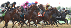 Where Can I Bet The Preakness Stakes From Washington State, Oregon