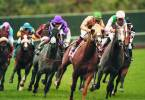 Where Can I Bet, Watch the Breeders Cup From California?