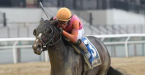 What Will Max Player Pay Out to Win the Belmont Stakes